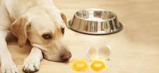 Eggs for dog
