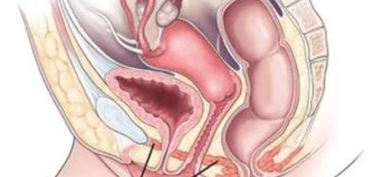 What are the pelvic floor muscles