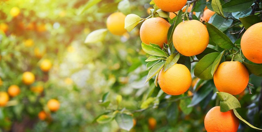 Evidence-Based Health Benefits Of Orange